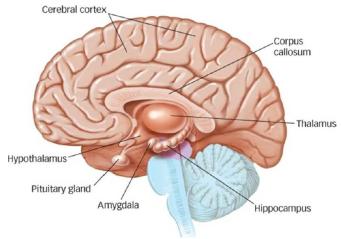 Los tres cerebros y nuestra marca