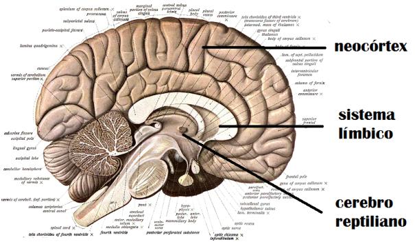 3 cerebros y nuestra marca