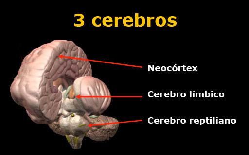los tres cerebros para nuestra marca personal