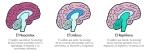 tres cerebros y nuestra marca
