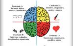 Los 4 cerebros de Herrmann